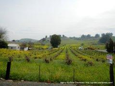 Viano Winery & Vineyard-Morello Ave