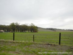 Chalome Valley meadows
