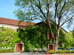 ivy covered estate winery