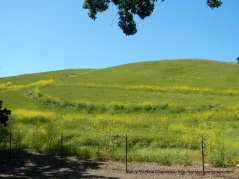 Sycamore Valley Open Space