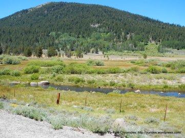 grassy river meadow