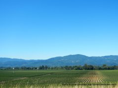 sonoma mountains