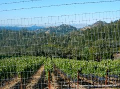 old lawley toll rd vineyards