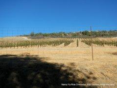 peachy canyon vineyards