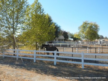 geneseo rd horse ranches