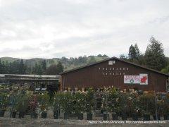 sycamore valley nursery