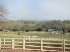 uvas rd ranch