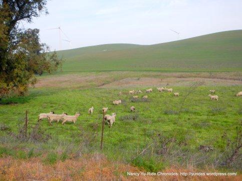 birds landing ranch