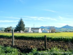 hollister valley