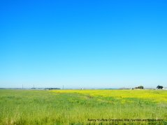 vibrant meadows
