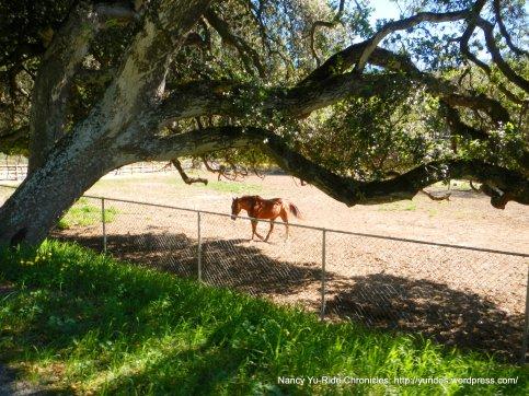 vega rd ranch