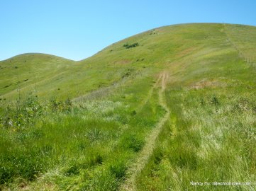 kestrel loop trail