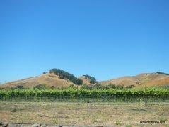 alhambra valley vineyards