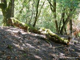 elderberry trail-salamander