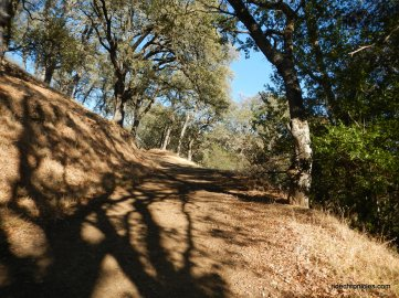 madrone trail