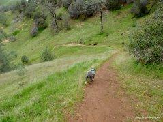 star mine trail