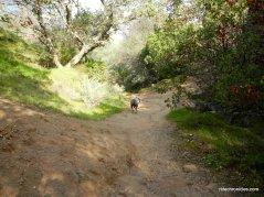 chaparral loop trail
