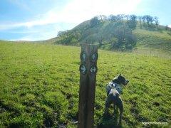 old homestead loop trail