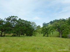murphy meadow trail