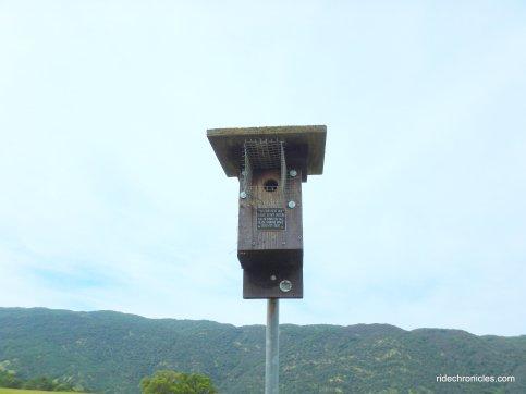 blue bird nest box