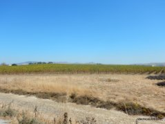 napa sonoma marsh wildlife area