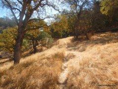 marsh trail