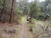 wasserman trail