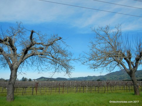 oak knoll ave