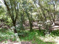 old creek rd