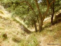 upper maguire peaks trail