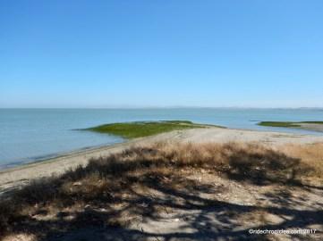 marsh trail overlook