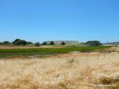 wildcat marsh