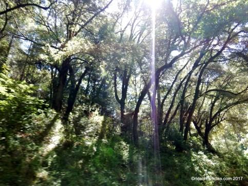 sutter creek rd