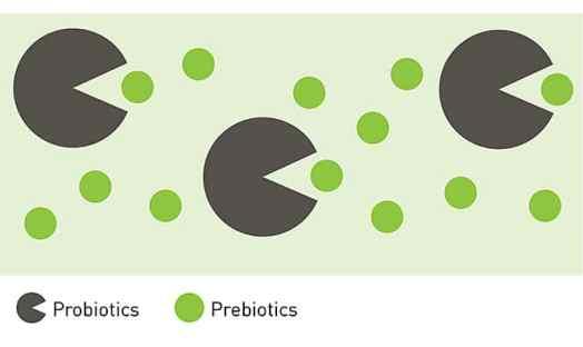 Image result for prebiotic