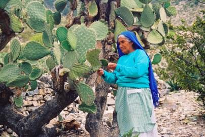 Yuri Martins Fontes / México-2002 / Wadley: Colhendo nopales (cactus comestível semelhante à palma do Sertão) / Aldeia do deserto