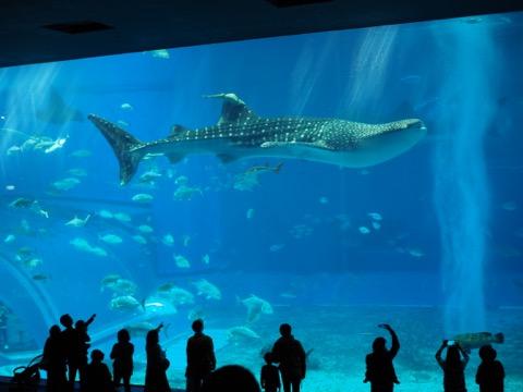 美ら海水族館大水槽ジンベエザメ
