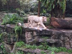 シンガポール動物園、ナイトサファリへ行ったよ