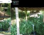 【不動清水】(福島県の湧水)岩瀬郡天栄村大里界谷地 天然記念物ビャッコイも自生する 眼病に効くという清水