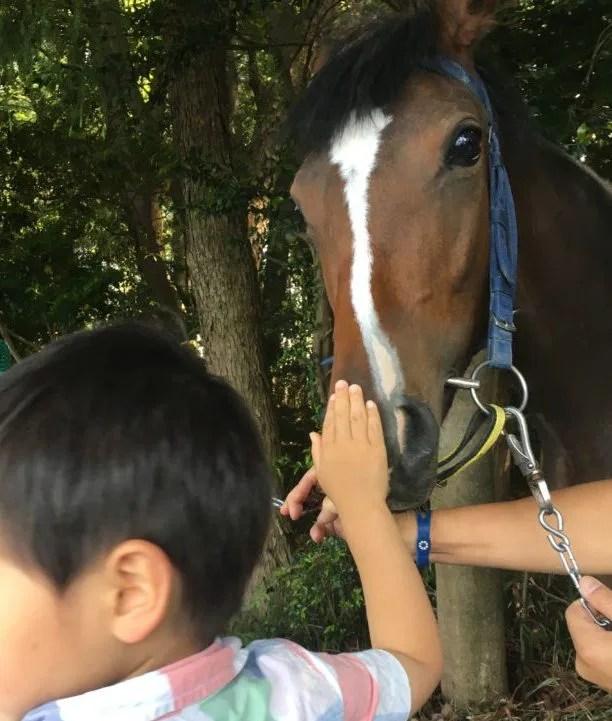 いなべ草競馬で馬にタッチ