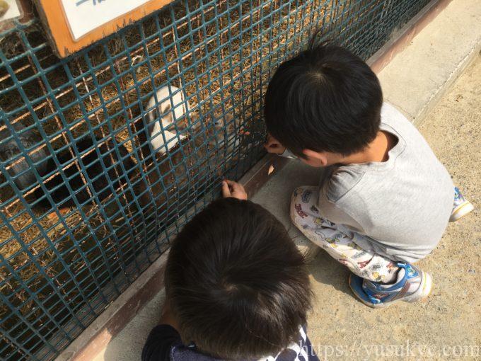 アグリパーク竜王動物ふれあい広場のウサギ