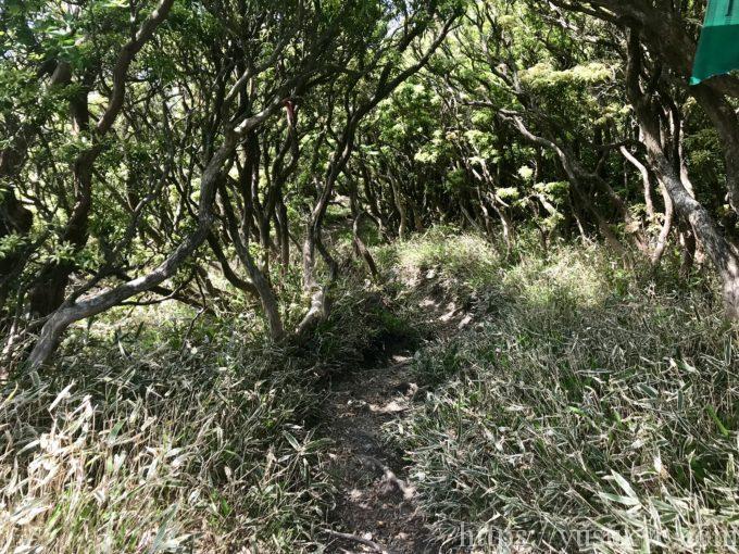入道ヶ岳登山ルート
