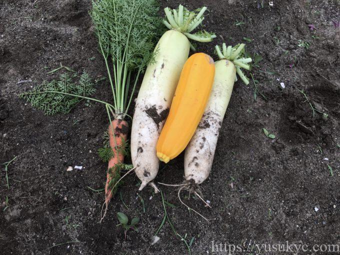 収穫野菜(大根・ニンジン・ズッキーニ)
