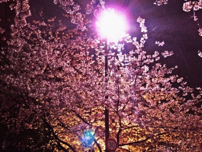 明るい街灯とスペイン坂の桜並木
