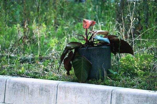 枯れた葉っぱと花