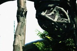 蜘蛛のたまご