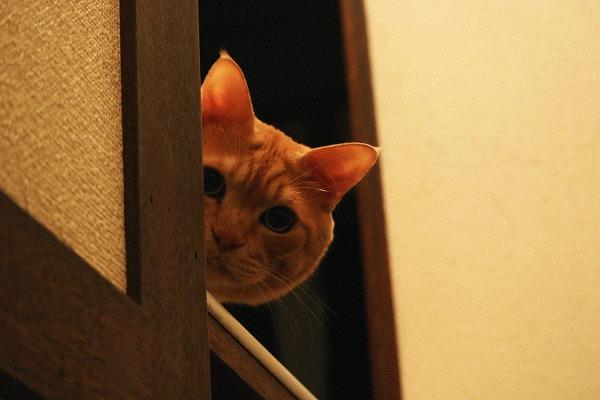 のぞく猫2