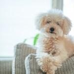 飼いやすい犬ランキング!小型犬編