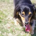 犬の熱中症は危険?死亡する可能性もあり!予防・対策とは?