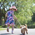 犬の年齢を人間に換算すると何歳になるの?早見表付き