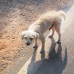 迷子の犬に遭遇した時はどうするの?注意点・保護の仕方・連絡すべき場所とは?
